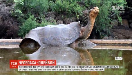 Легендарний 100-річний черепаха Дієго повертається у дику природу на Галапагоські острови