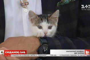 Троє грайливих кошенят шукають турботливих господарів