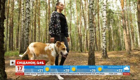 Врятували з того світу: як складається життя собаки Дора у новій родині