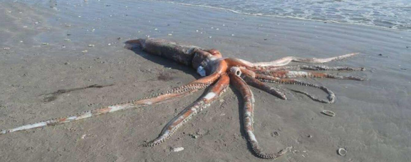У ПАР зафільмували гігантського кальмара, якого винесло з глибин на берег