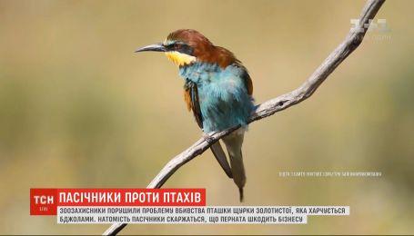 Українські пасічники вимушені вбивати пташок, які масово виїдають бджіл