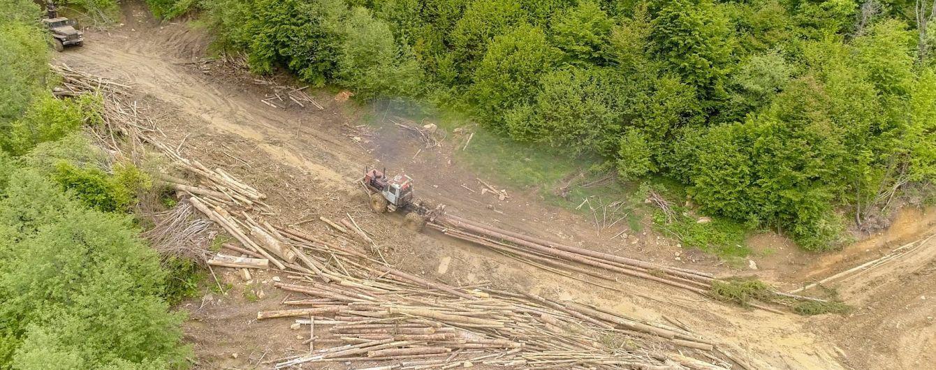 """Як Карпати """"лисіють"""": з'явилися фото тотальної вирубки лісів"""