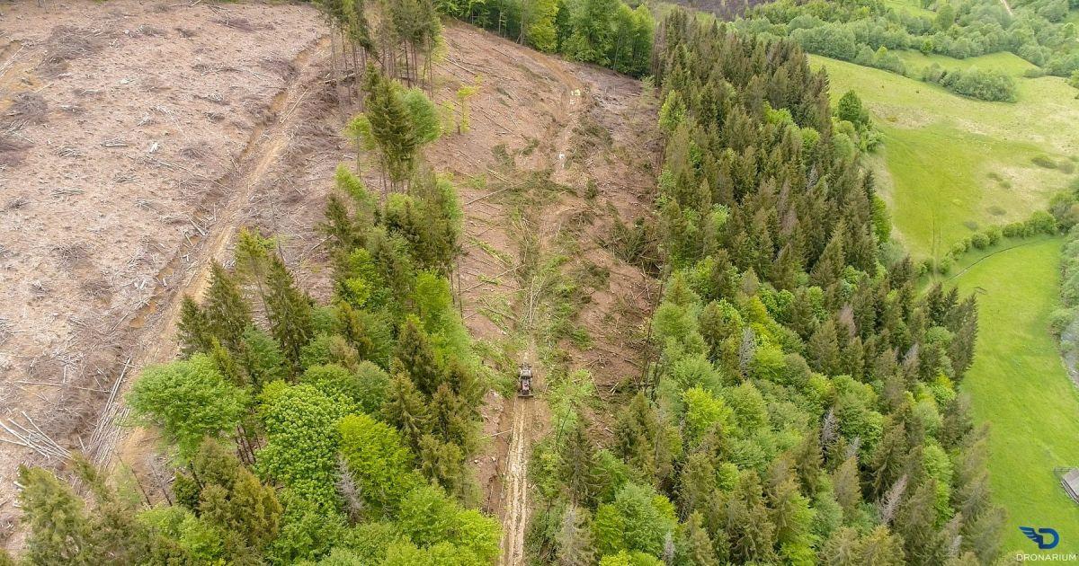 IKEA торгует стульями из деревьев, которые незаконно вырубили в украинских Карпатах - расследование экологов