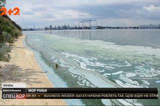 У Миколаївській області Бузький лиман перетворюється на смердюче болото