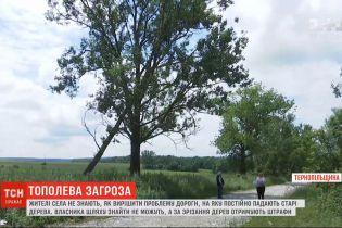 Опасный путь: на дорогу в Тернопольской области постоянно падают старые тополя