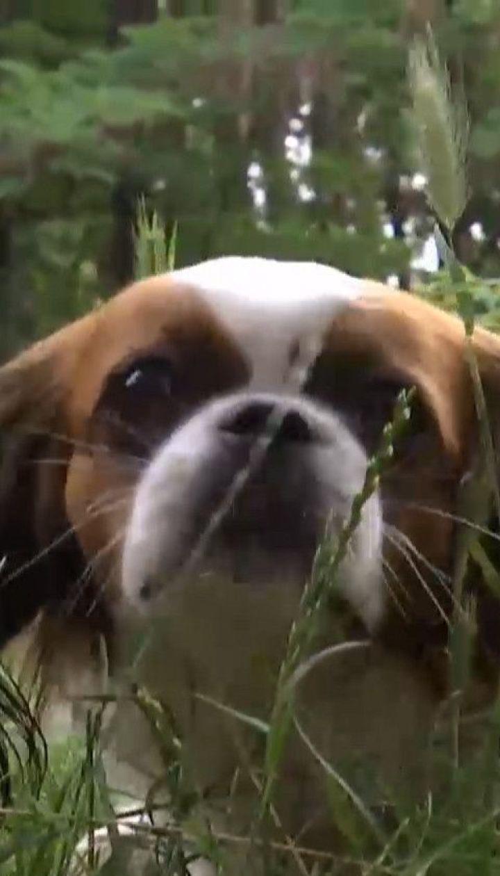 Тварини на відпочинку: як уберегти чотирилапих від теплового удару