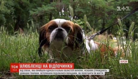 Тварини на відпочинку: як захистити чотирилапих від теплового удару