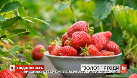 Снизятся ли цены на ягоды и овощи в этом сезоне