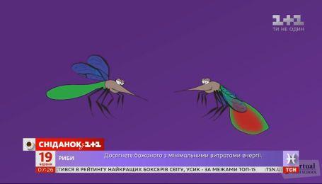 Открыт сезон комаров: интересные факты о насекомых