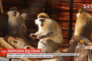 Мешканців харківського зоопарку годують фруктовим або м'ясним морозивом, аби урятувати від спеки