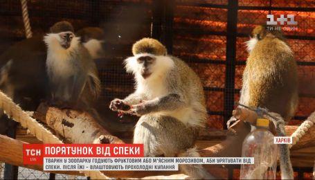 В Харьковском зоопарке животных кормят фруктовым или мясным мороженым, чтобы спасти от жары