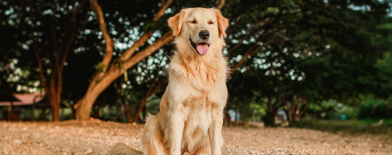 Собаки для навигации используют магнитное поле Земли - ученые