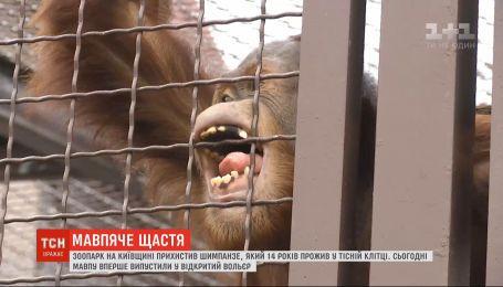 Зоопарк в Киевской области приютил шимпанзе, который 14 лет провел в тесной клетке