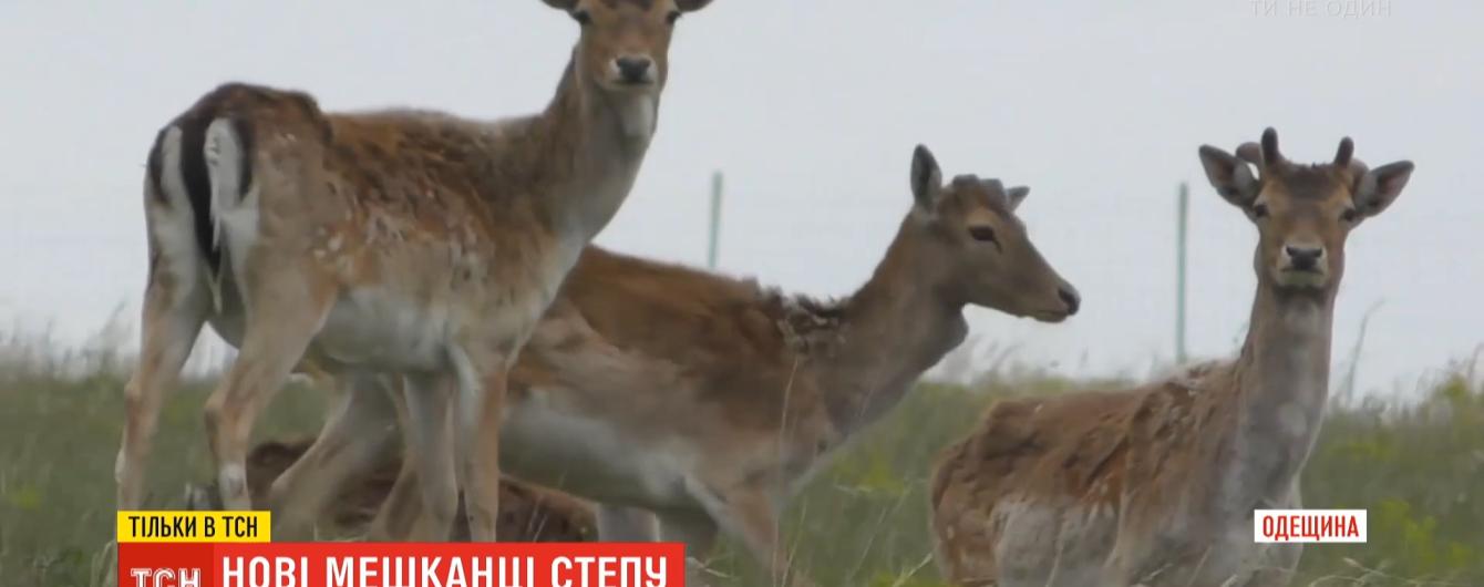 Врятувати заповідний степ: в Одеській області відновлюють популяцію куланів і ланей