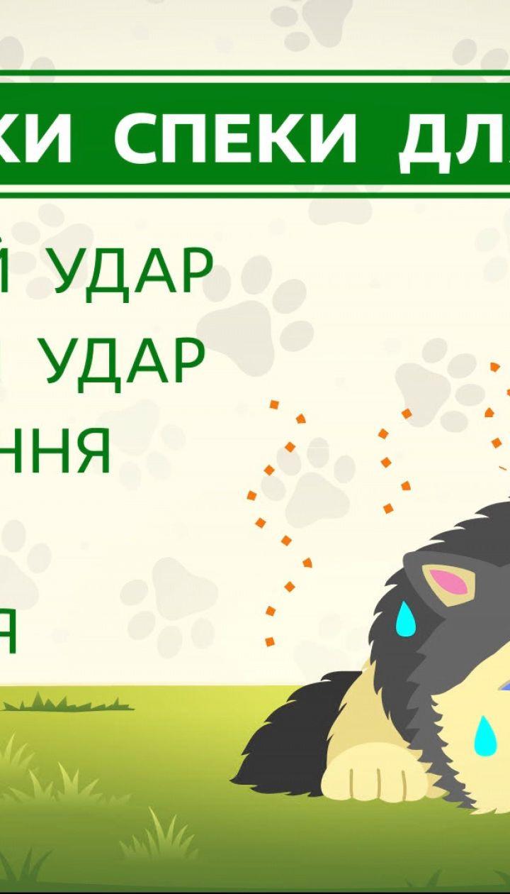 Як захистити собаку від перегрівання та теплового удару – поради ветеринара