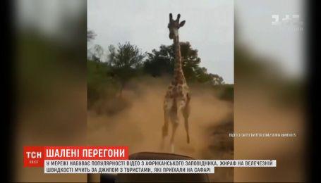 У мережі набирає популярності відео, на якому жираф мчить за джипом з туристами