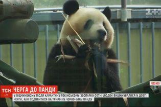 У Токійському зоопарку сотні відвідувачів завітали подивитися на панду