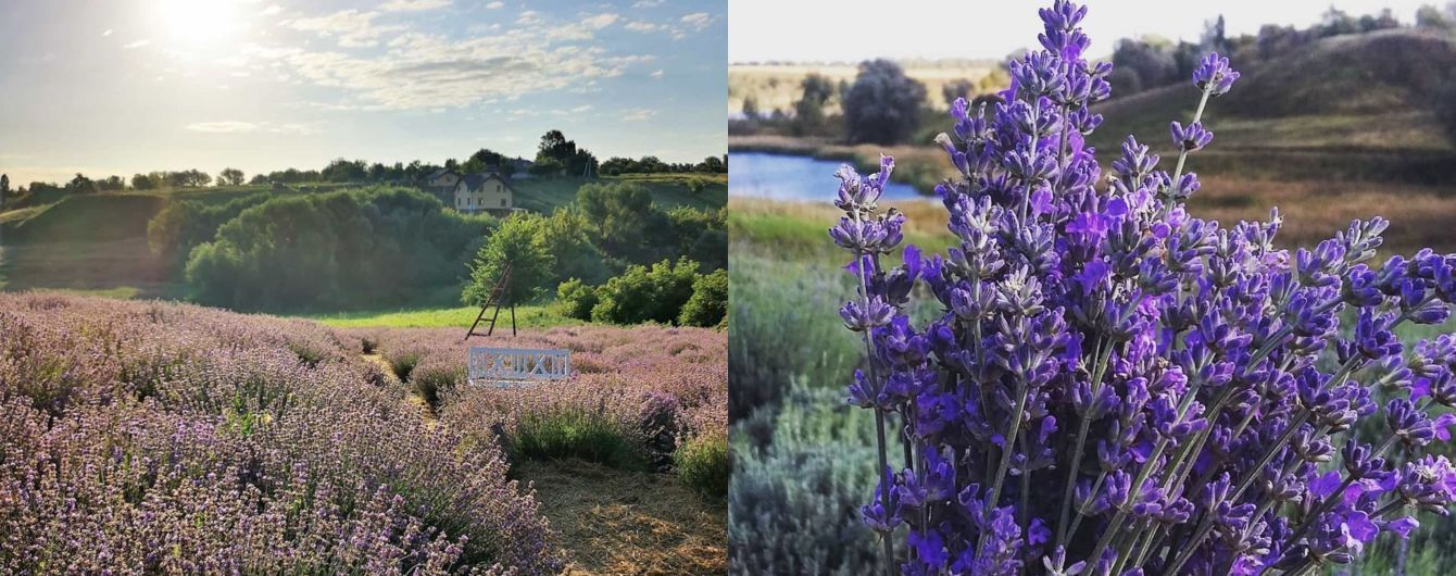 Французький вікенд: де розташовані лавандові поля в Україні