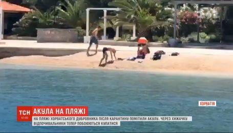 Зубата і небезпечна: на хорватське узбережжя припливла акула і налякала відпочивальників
