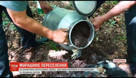 У Вінницькій області переселяють мурах