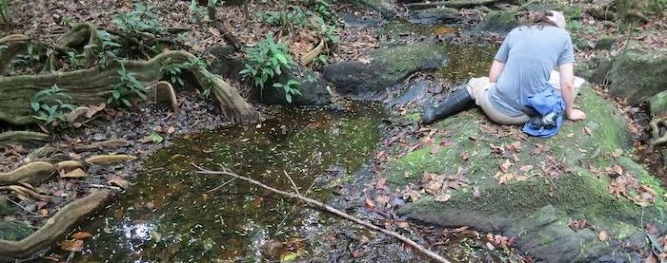 Студентка виявила 18 нових видів водних жуків в Південній Америці