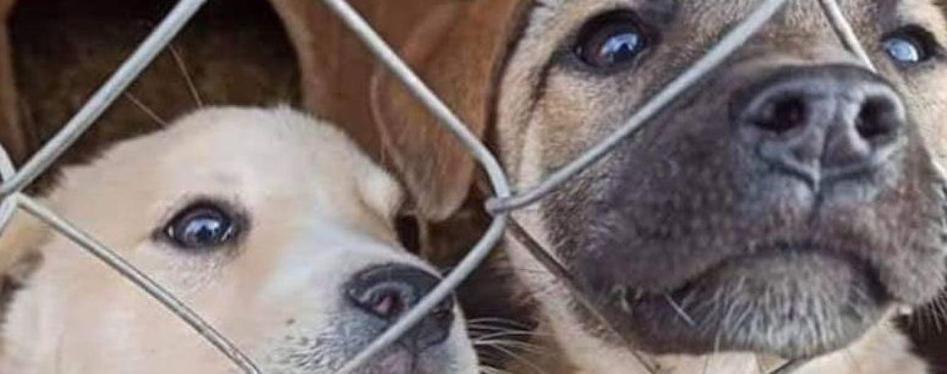 В Івано-Франківській області затопило собачий притулок: зоозахисники б'ють на сполох