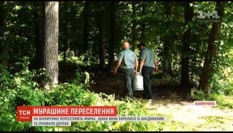 У Вінницькій області випробовують новий метод боротьби зі шкідниками