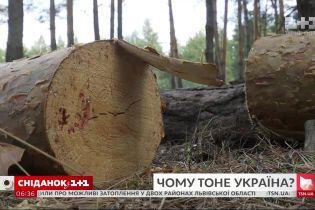 Велика вода: чи справді захід України тоне через вирубку лісів