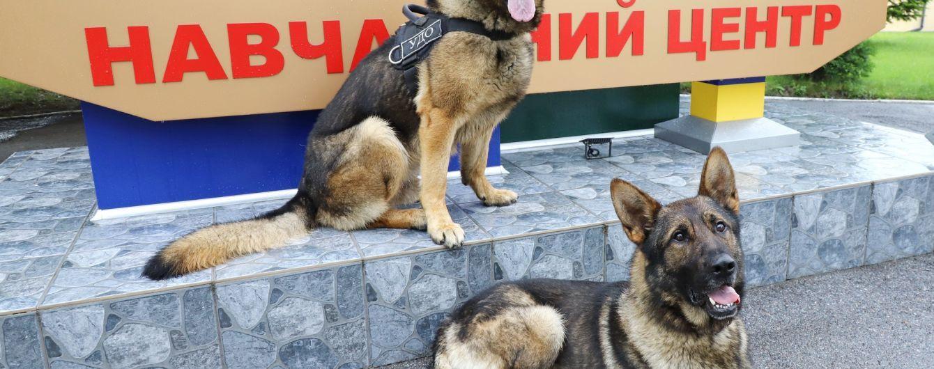 Защищать Зеленского: во Львовской области подготовили собак для президентской охраны