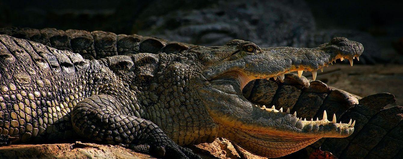 Крокодил з'їв рибалку на очах у дружини
