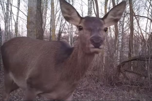 Необычный гость: возле метро Киева заметили оленя