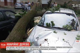 """""""Эффект домино"""": в Ровно ветка свалила столб и погромила 4 автомобиля"""