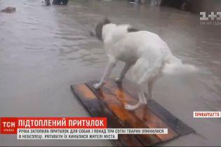В Калуше приют для собак превратился в озеро - животных спасали всем городом