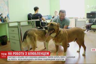 """Лохматые и хвостатые: украинцы присоединились к акции """"возьми собаку на работу"""""""