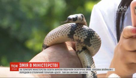 У Міністерство освіти України заповзла змія