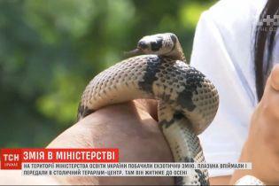 В Министерство образования Украины заползла змея