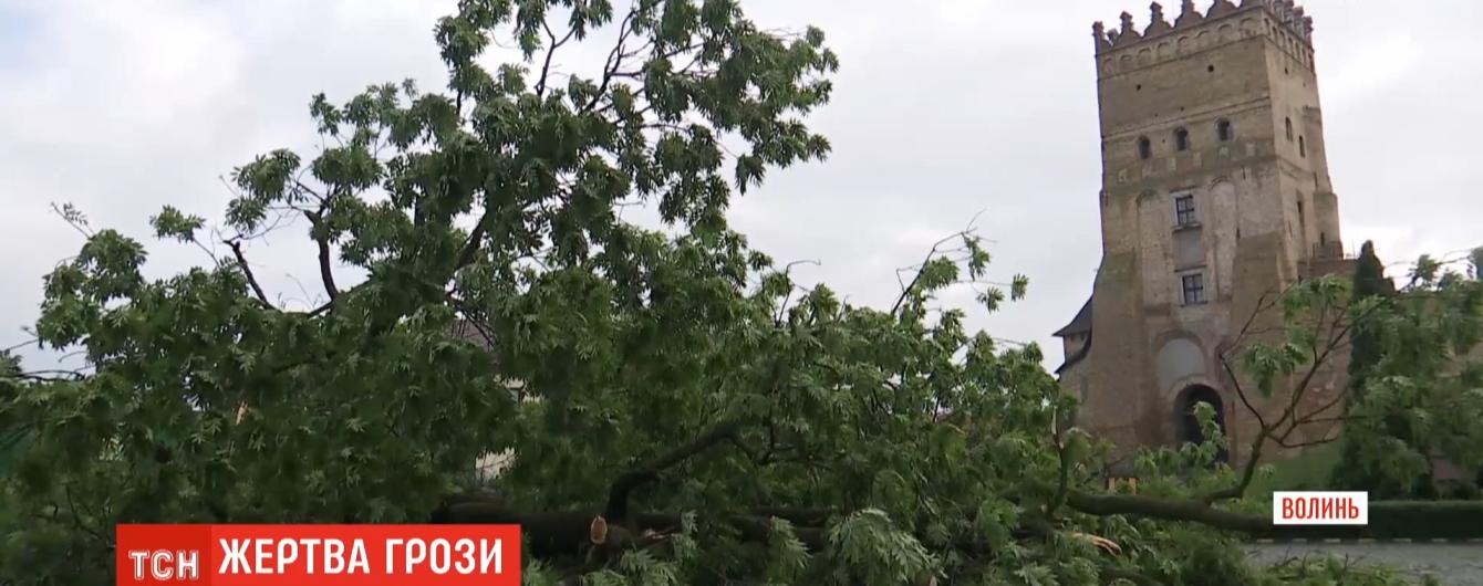 В Луцке после грозы упал двухсотлетний Лесин ясень