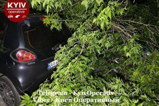 В Киеве на Подоле дерево упало на припаркованные машины