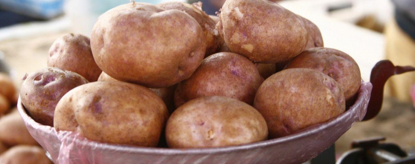 В Украине существенно подешевела молодая картошка
