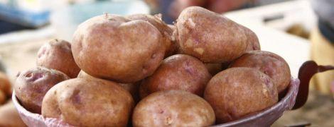 Аналітики прогнозують зростання світового споживання картоплі
