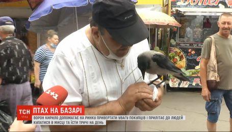 Місцевий символ: ворон подружився з продавцями ринку на столичній Троєщині