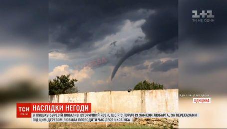 Смерч, свергнутый 200-летний ясень и сорванные крыши: регионами Украины пронеслась очередная непогода