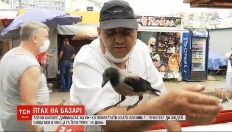 Умный и харизматичный: ворон по имени Кирилл дружит с продавцами рынка