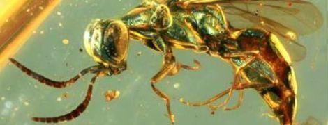 Завдяки давньому бурштину вчені дізналися, якого кольору були комахи часів динозаврів