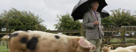 Поспілкувався з породистою свинею: принц Чарльз з'їздив на ферму