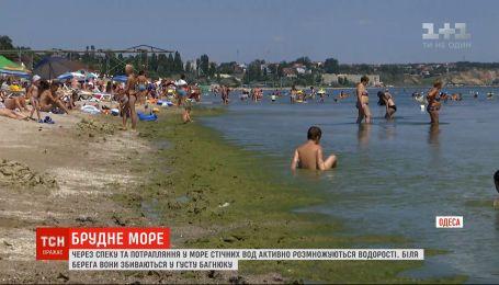 В Одессе зацвело море: вода стала грязно-зеленого цвета