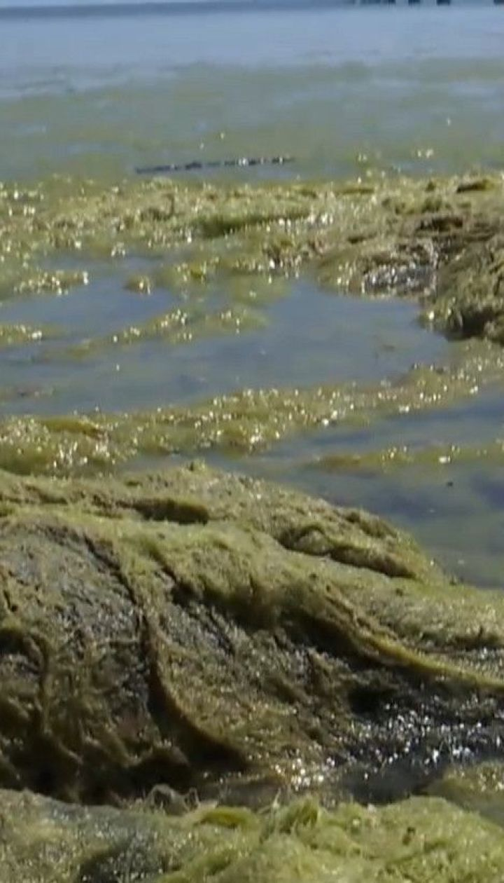 Брудно-зелена вода: у Одесі мікроскопічні водорості заболотили море