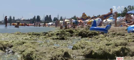 Цвітіння моря в Одесі: біолог розповів, скільки це може тривати