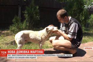 Пес Мартін, якого мордував бійцівський собака, знайшов собі родину у Борисполі