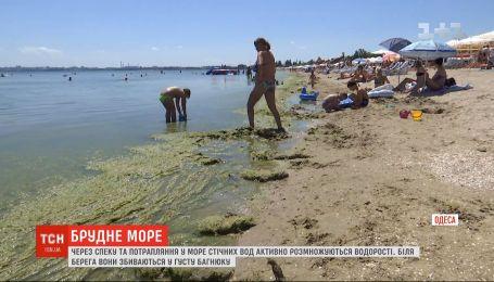 """Экологи предполагают, что море в Одессе будет """"цвести"""" как минимум несколько недель, а то и месяц"""
